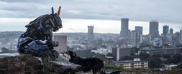 Chappie meets perro... :_)